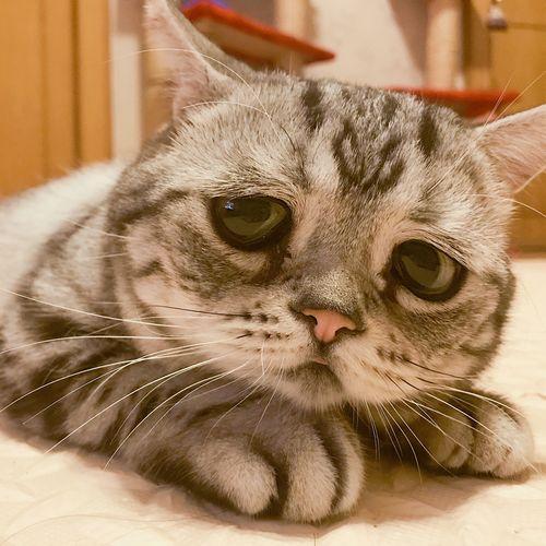 «Черные кошки» и белые пятна: привет «месту встречи...» и «ликвидации»