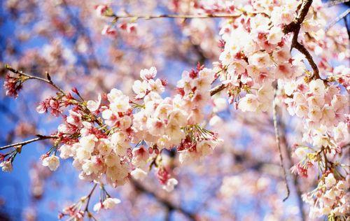 Итоги апреля: «склифосовский» — герой месяца
