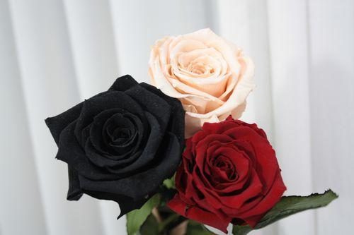 Красная роза nina donis