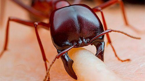 Обнаружены муравьи, которым не нужны пища и свет