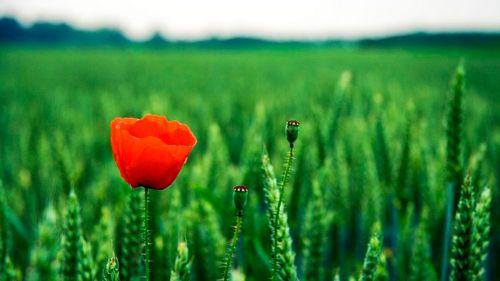 Одинокий рейнджер: эрми хаммер и джонни депп в москве