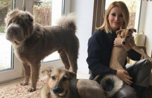 Ольга орлова и анастасия волочкова рассказали о ветеринарах для своих питомцев