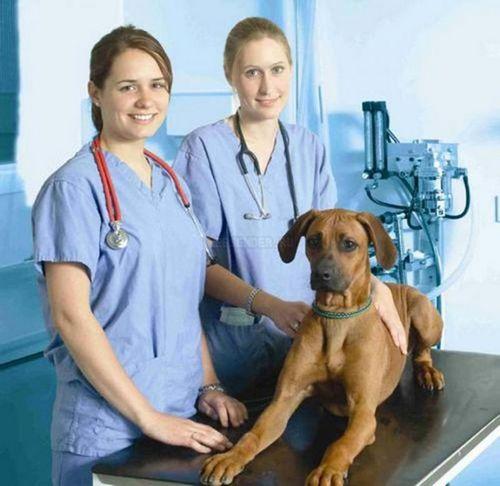 Особенности организации ветеринарных клиник