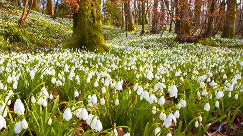 «Оттепель»: весной и не пахнет