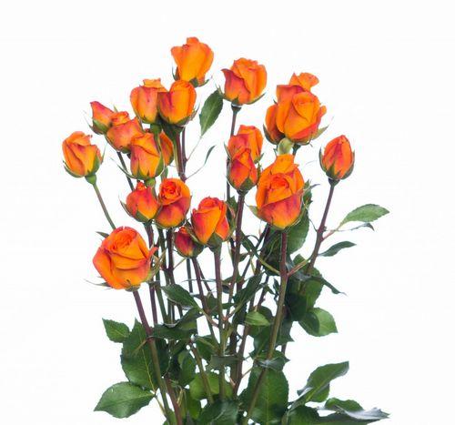 Роза сябитова любит упругие ягодицы