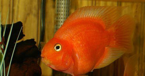 Рыбка накрючке: ольга романовская рассказала, как завоевала мужа