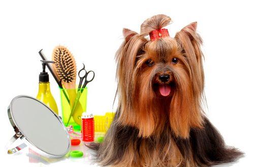 Важные моменты содержания: машинка для стрижки и лечение лишая у собак