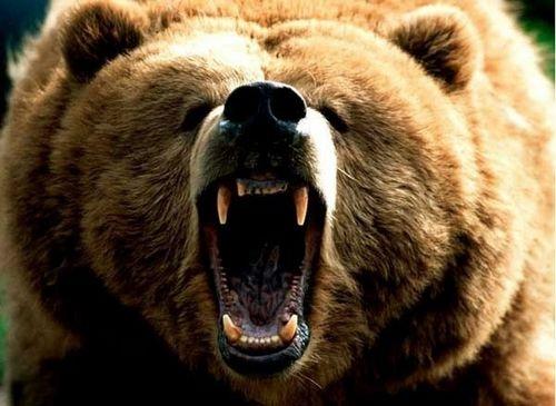 Журнал медведь отметил юбилей